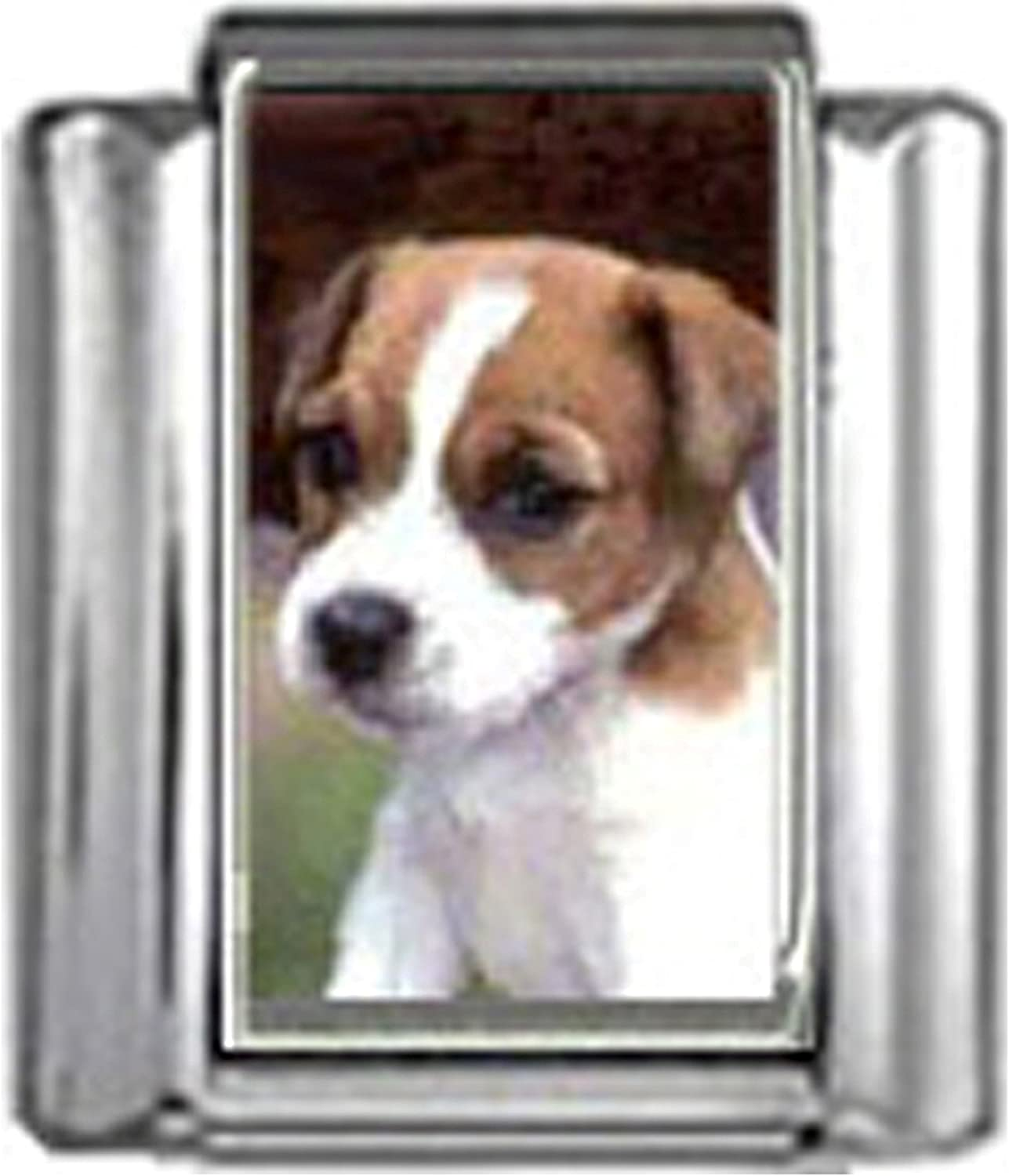 Stylysh Charms JACK RUSSELL TERRIER DOG Photo Italian 9mm Link DG253 Fits Nomination Classic