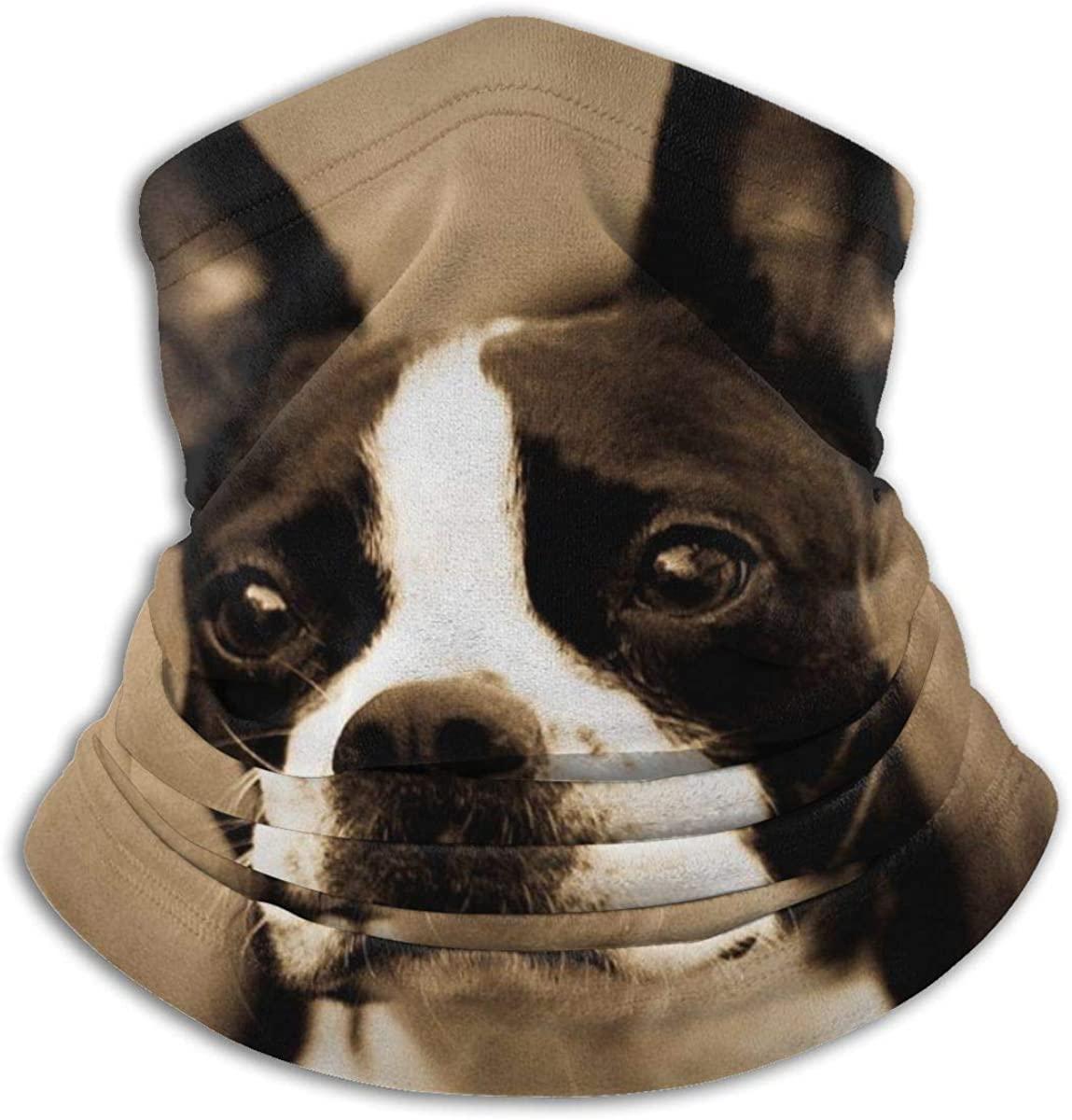 Face Mask, Neck Gaiter, Boston Terrier Dog Bandana, Balaclava Windproof Anti Dust Magic Scarf for Women Men
