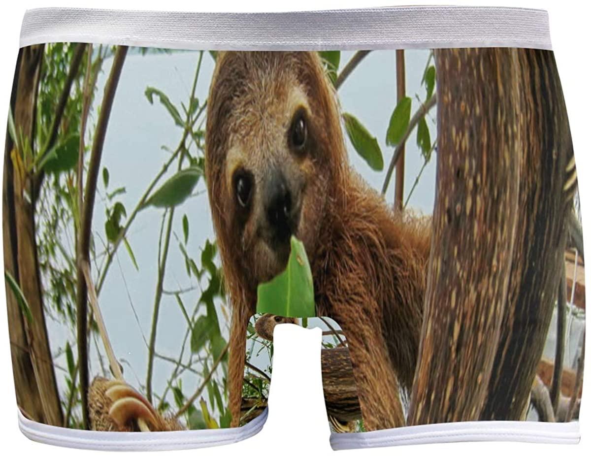 SLHFPX Forest Nature Sloth Boyshort Panties Womens Long Leg Underwear Briefs Boy Shorts