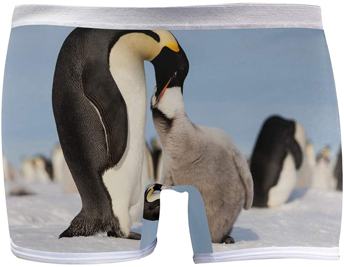 SLHFPX Womens Underwear Boy Shorts Panties Emperor Penguin Feeding Hungry Chick Ladies Comfort Boy Shorts Panty