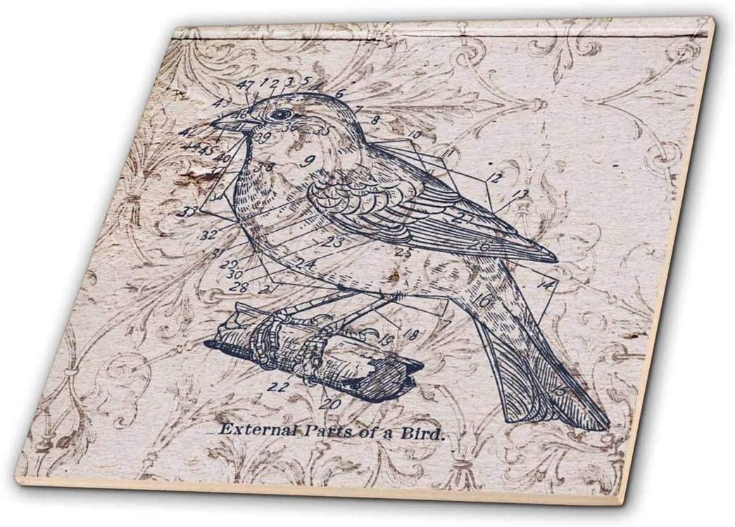 3dRose ct_110267_4 Vintage Birds with Diagram Steampunk Art Ceramic Tile, 12