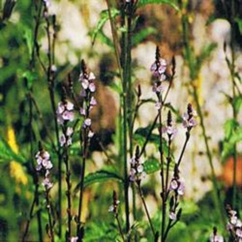 Ainsworths 10 ml Vervain Bach Flower Remedy
