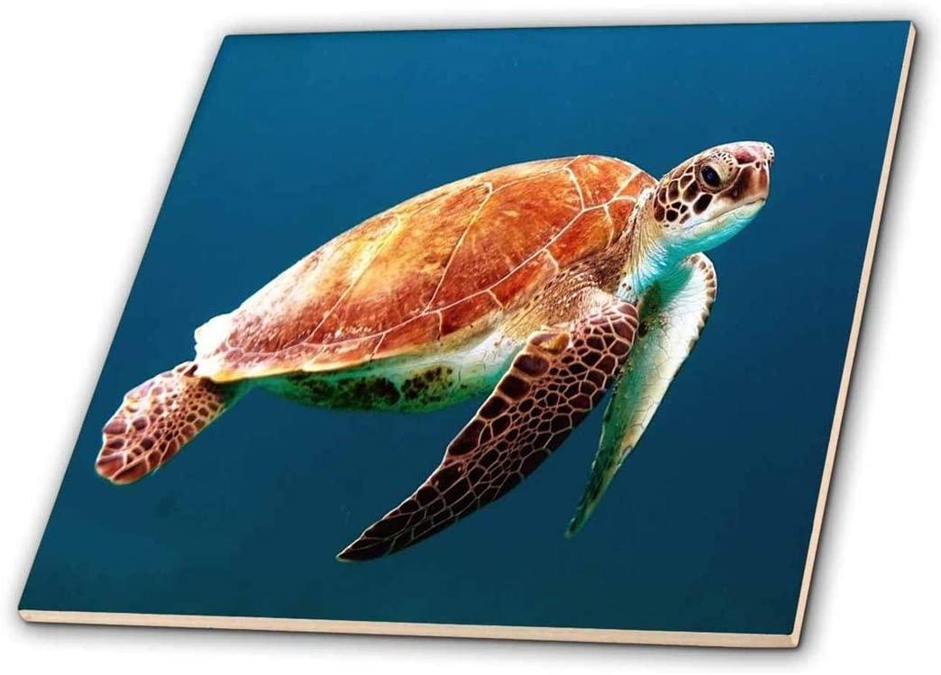 3dRose ct_256153_2 Image of Closeup of Large Turtle Underwater Ceramic Tiles, 6