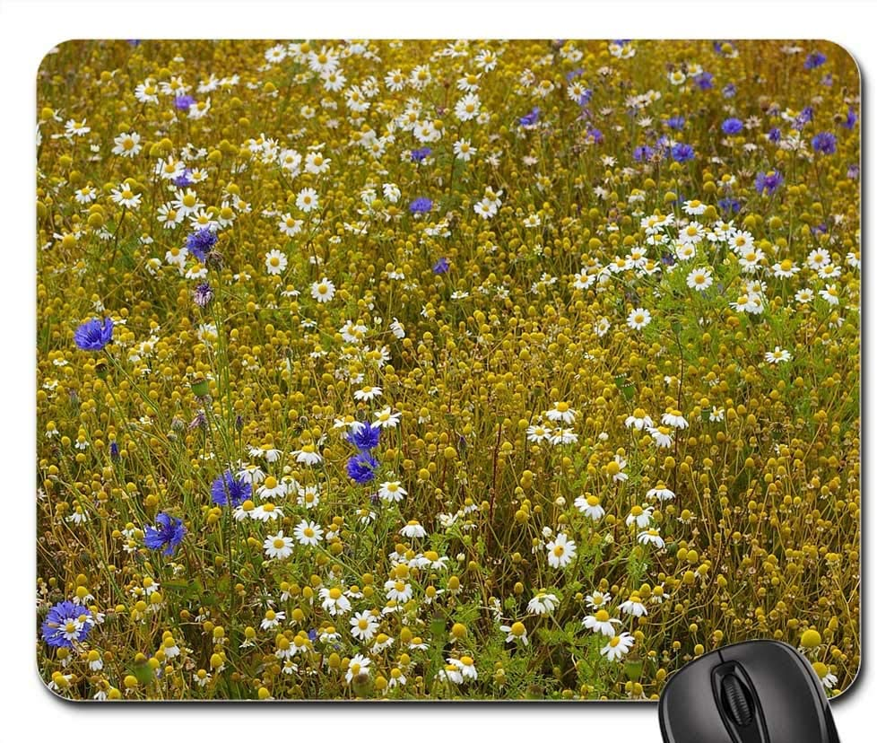 Mouse Pad - Chamomile Blossoms Chamomile Flowers Herbal Medicine