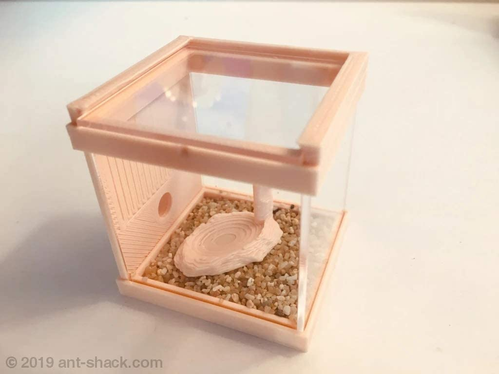 ANT SHACK Small Ant Outworld Kit Nature - Ant Farm Nest Formicarium Kit