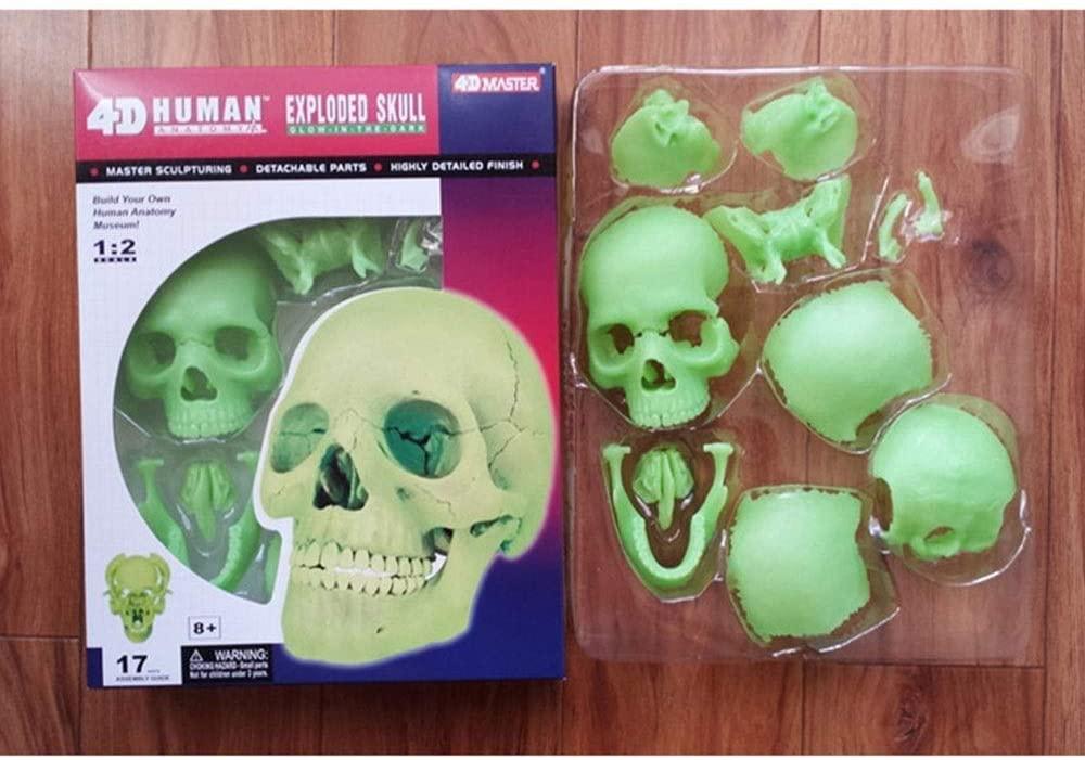 Human Organ Anatomical Model,Detachable Skull Model Luminous Head Bone Assembly - for Medical Educational Training Aid Lab Equipment