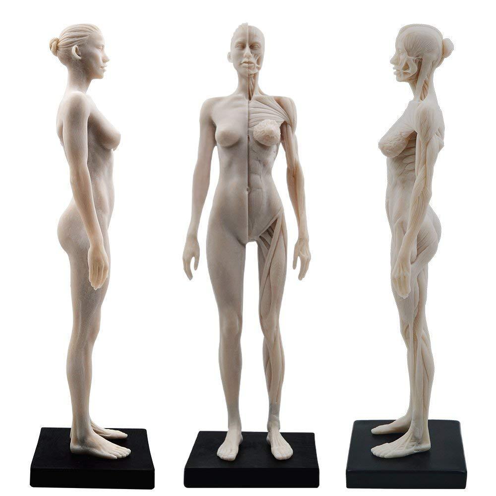 OUBO Dental 11 Inch Female Human Anatomy Model of Art Anatomy Figure(White)