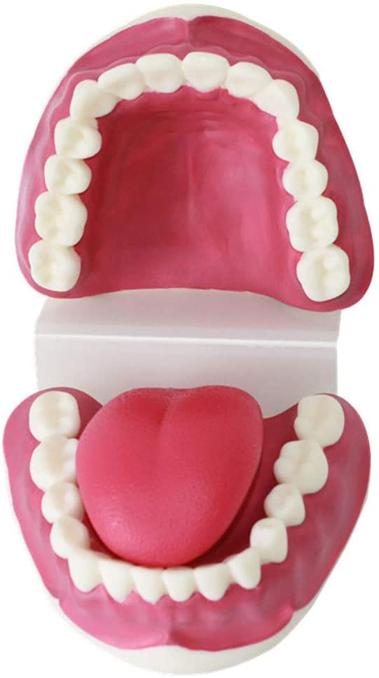 BZZBZZ Human Tooth Model, Oral Care and Health Care Anatomy Adjustable Model, 3 Times Magnification for Medical Demonstration Teaching Children Brushing Demonstration