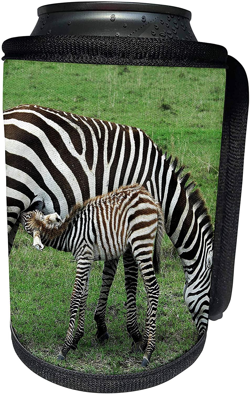 3dRose Kike Calvo Animals - Common zebra breast feeding mil from the mother Kenya Africa - Can Cooler Bottle Wrap (cc_9860_1)