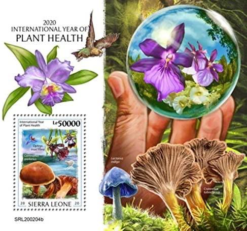 Sierra Leone - 2020 Year of Plant Health - Stamp Souvenir Sheet - SRL200204b