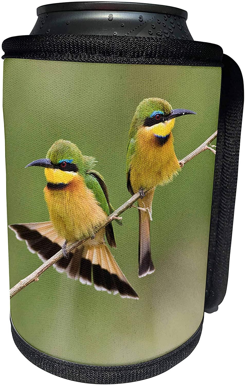 3dRose Danita Delimont - Birds - Africa. Tanzania. Little Bee Eaters at Manyara NP-AF45 RBE0163 - Ralph H. Bendjebar - Can Cooler Bottle Wrap (cc_70637_1)