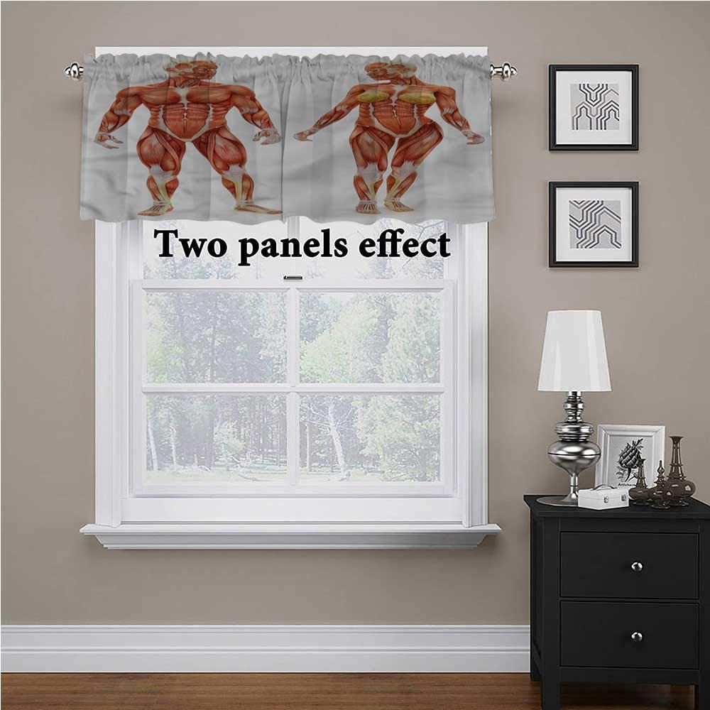 shirlyhome Human Anatomy Solid Blackout Valance Male Human Body for Kids Room/Baby Nursery/Dormitory, 54 Inch by 18 Inch 1 Panel