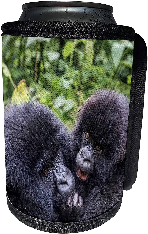 3dRose Danita Delimont - Baby animals - Rwanda, Volcanoes NP, Kinigi, Mountain Gorilla Playful Baby. - Can Cooler Bottle Wrap (cc_276548_1)