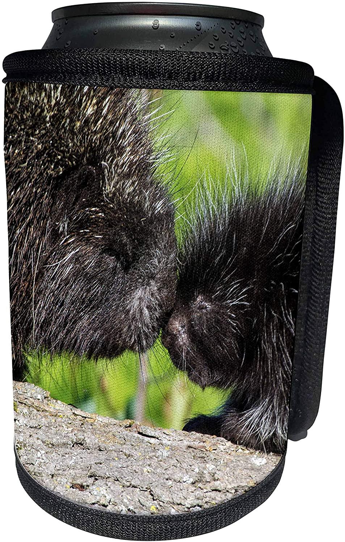 3dRose Danita Delimont - Animals - USA, Minnesota, Sandstone, Porcupine Mother and Baby - Can Cooler Bottle Wrap (cc_279138_1)