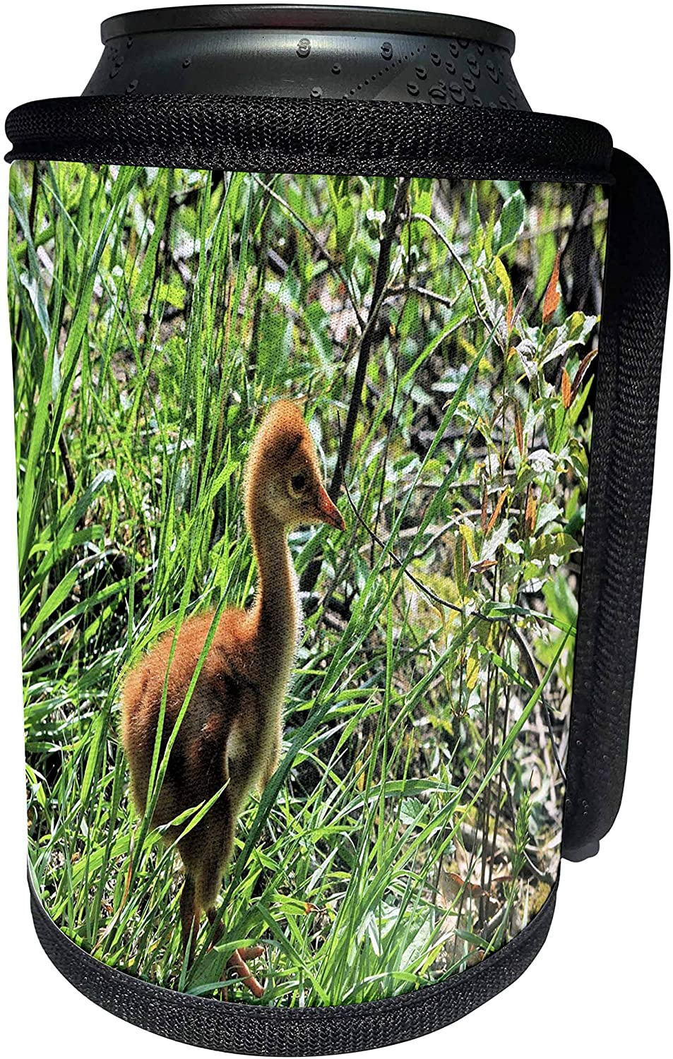 3dRose Dreamscapes by Leslie - Birds - Baby Sandhill Crane taking a stroll - Can Cooler Bottle Wrap (cc_314217_1)