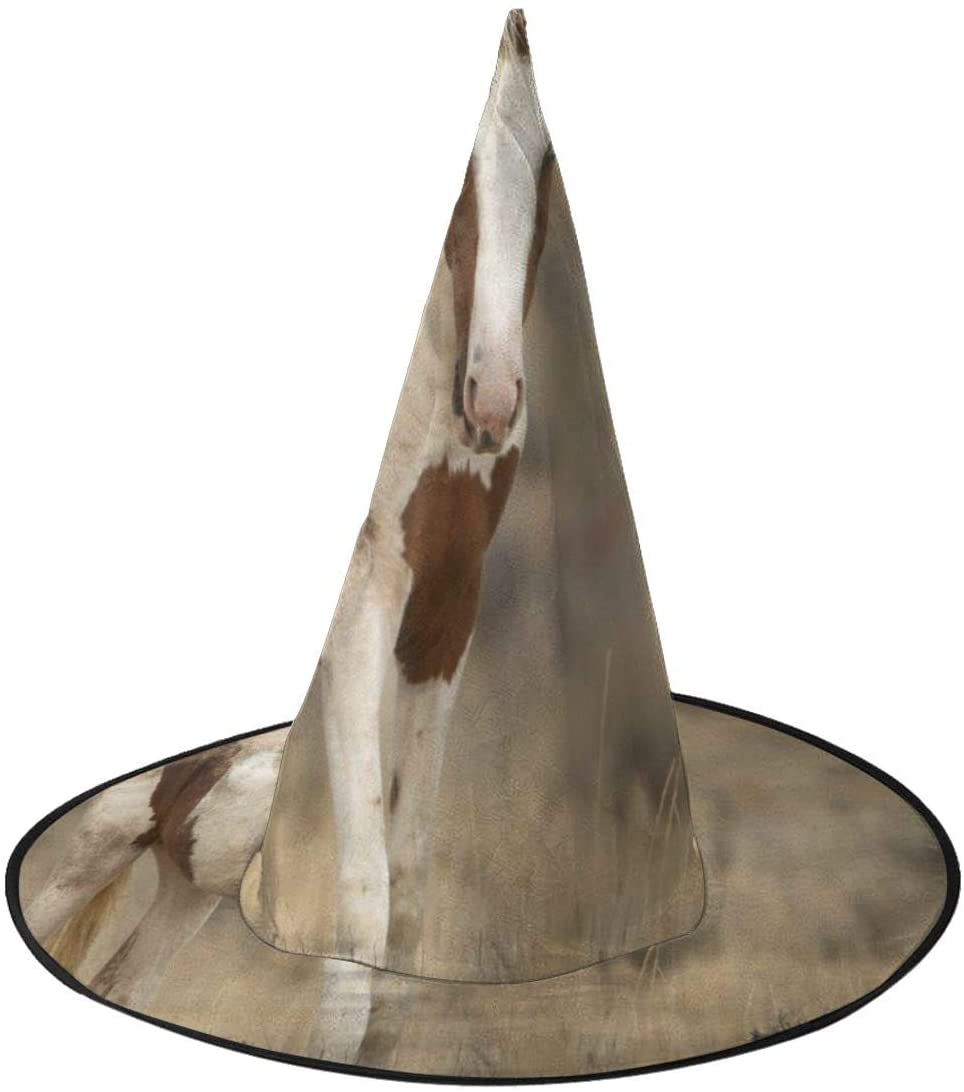 Halloween Witch Hat,Tropical Wild Horse Halloween Costume Witch Hat for Holiday Party