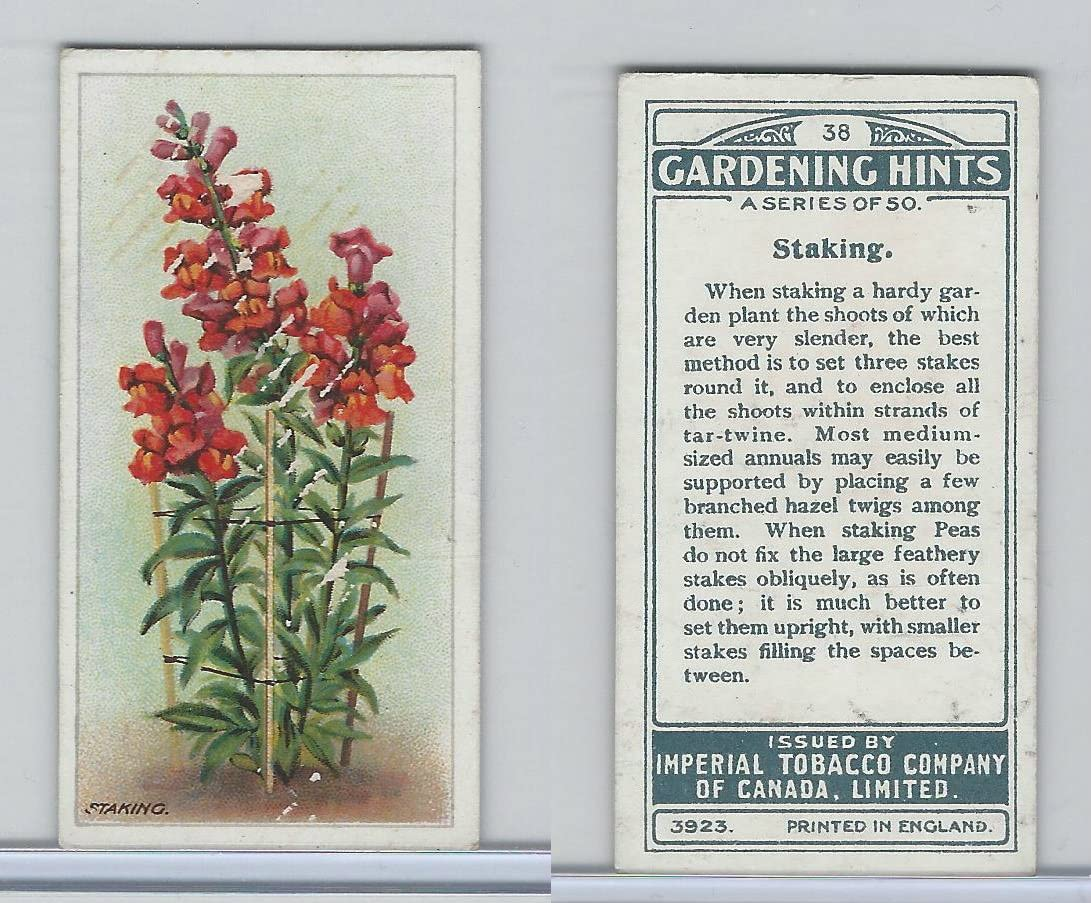 C15 Imperial Tobacco, Gardening Hints, 1923, 38 Staking
