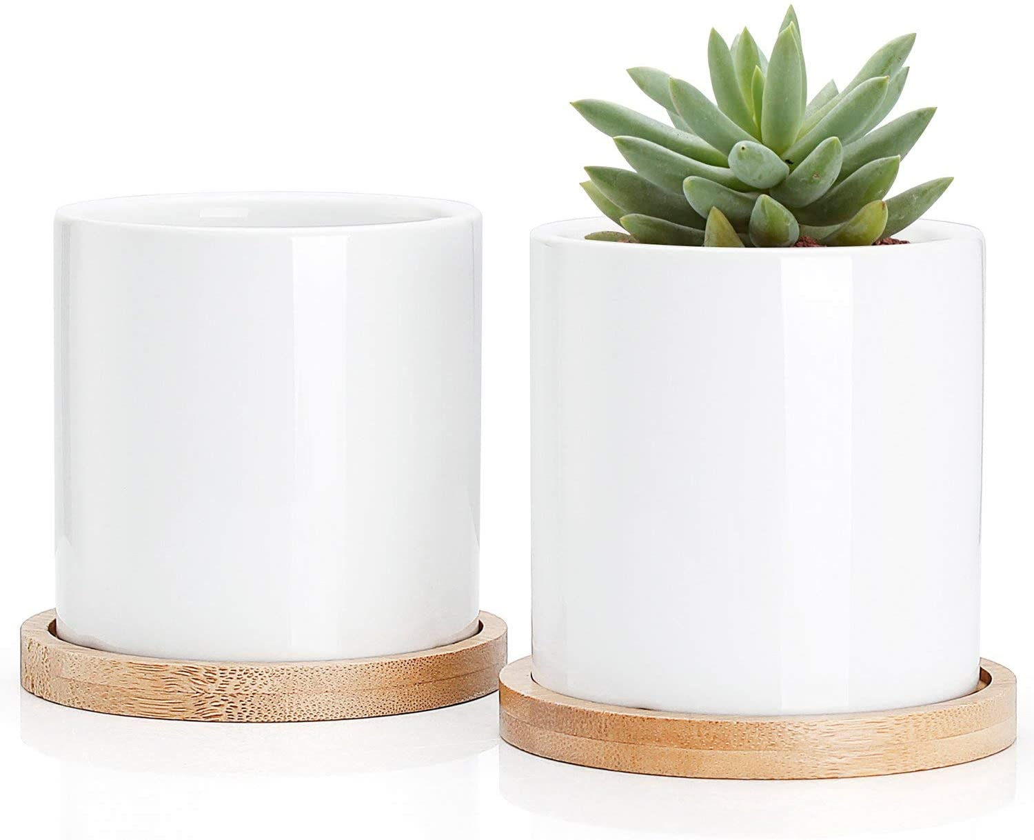 Greenaholics Succulent Plant Pots - 3 Inch Ceramic Cylindrical Containers, Small Cactus Planters, Flower Pots with Drainage Hole, Bamboo Tray, Set of 2, White (Renewed)