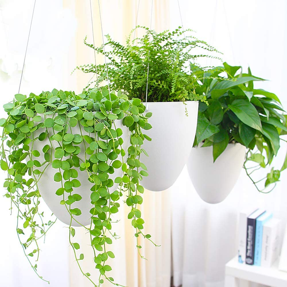 Sungmor Garden Self Watering Hanging Planter   3PC Pack, White   Succulent Flower Pot Air Plant Holder   Unique Eggshell Houseplant Pots   Home Indoor Outdoor Office Decorative Container