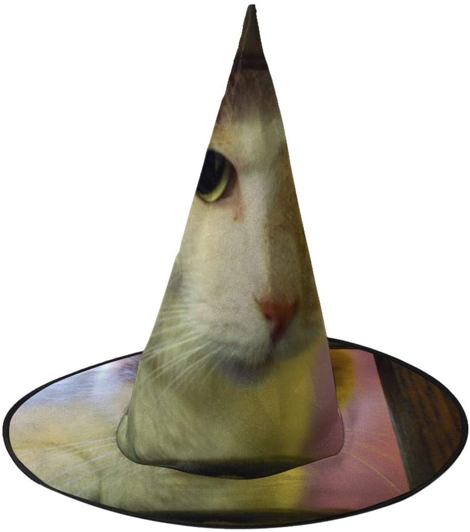 Halloween Costume Witch Hat,Cat In A Frame Accessory for Holiday Halloween Party