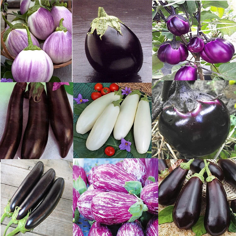 Eggplant seeds 9 packets (Set of varieties) Vegetable Seed from Ukraine