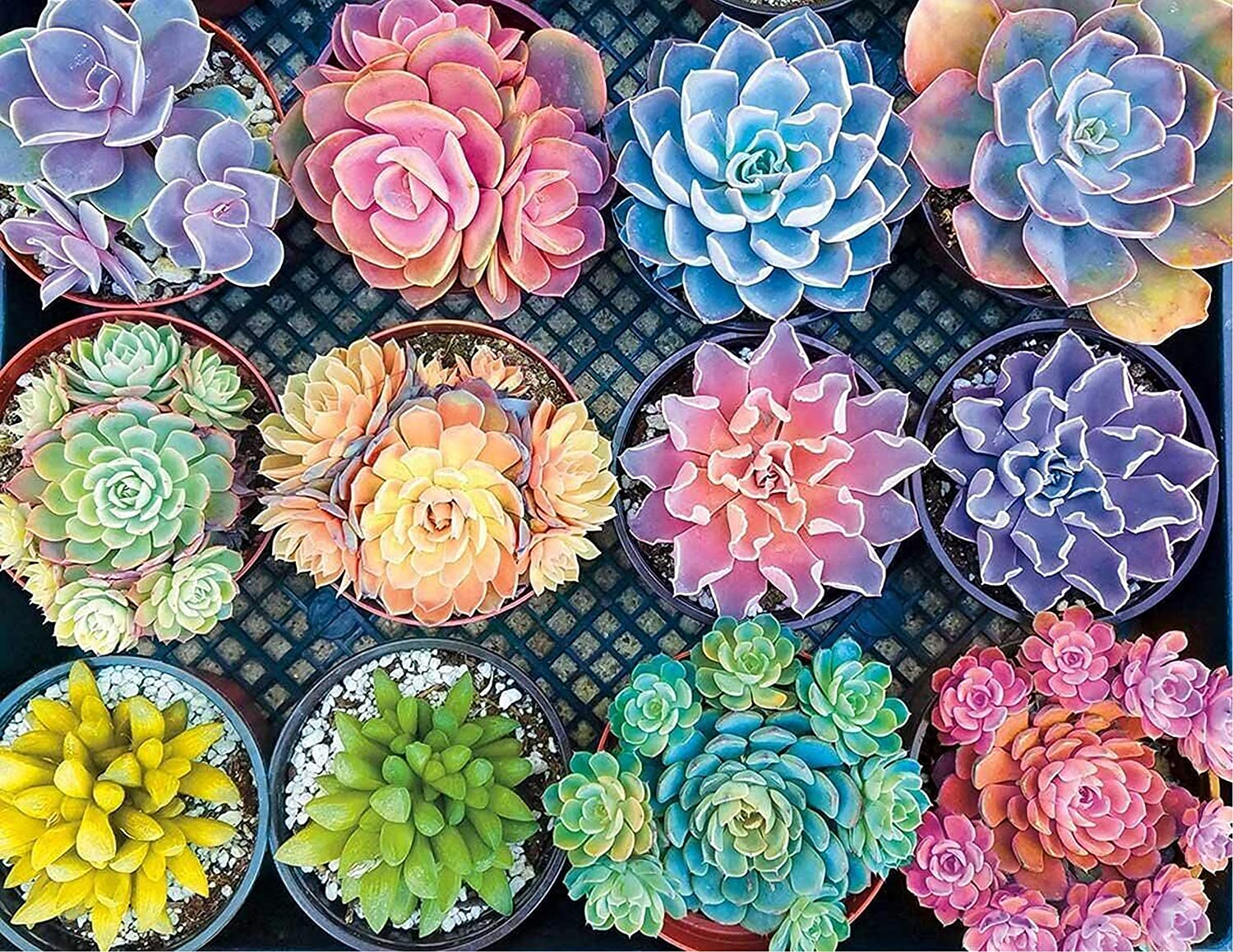 Colorful Succulents DIY 5D Diamond Painting by Number Kits for Adults Kids, Painting Cross Stitch Full Drill Crystal Rhinestone Embroidery Pictures Arts Craft for Home Wall Decors Christmas Gifts