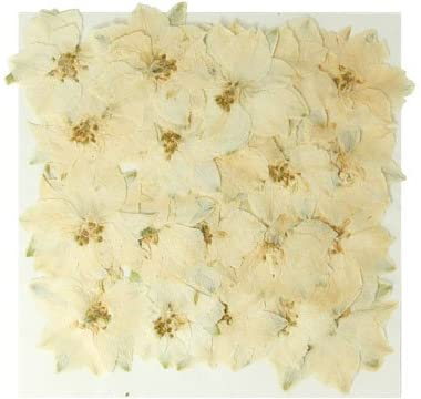 Silver J Pressed real dried flowers, White larkspur, delphinium 20pcs. Art, craft, card making