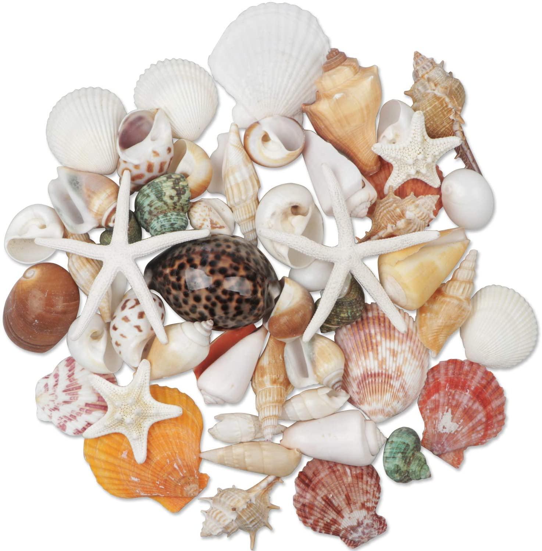 YiYa 50+ Pcs Medium Sea Shells Mixed Beach Seashells 16 Kinds Colorful Natural Seashells and 2 Kinds Starfish Various Sizes for Beach Theme Party Wedding Decor DIY Crafts Fish Tank Vase Fillers (M)