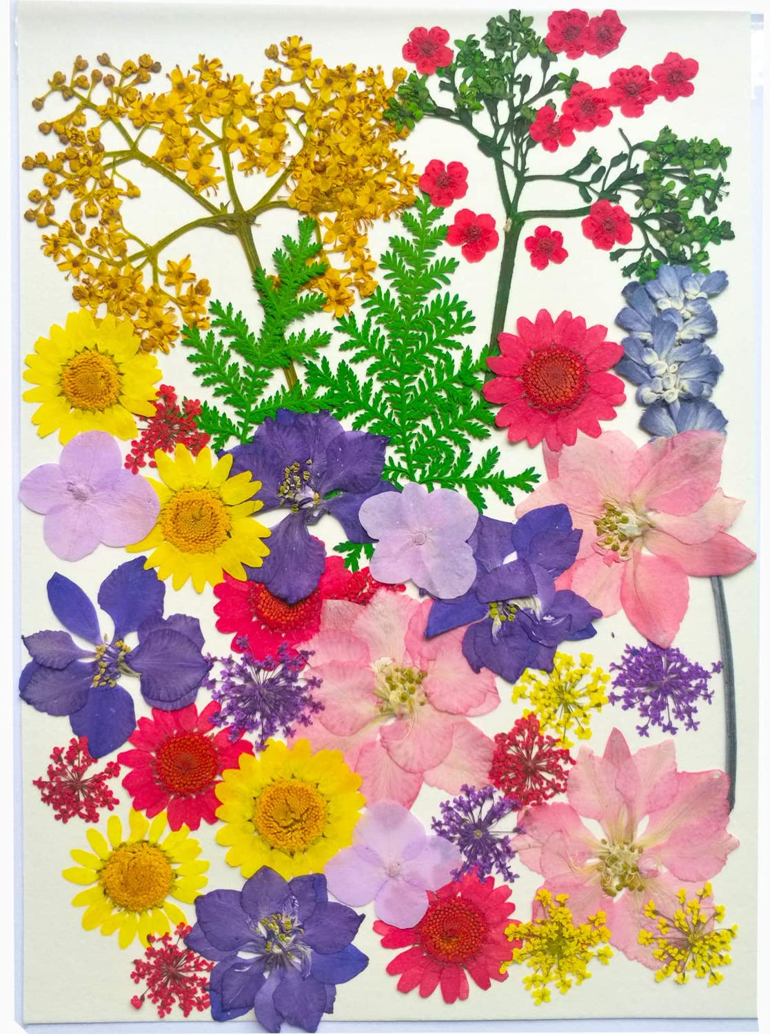 Natural Real Dried Pressed Flowers Leaves for Resin Jewelry Nail Art Crafts Candle Making, Multi-Variety Colorful 44PCS