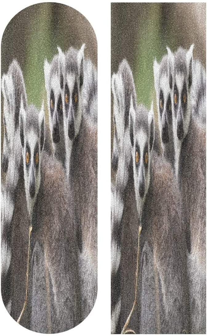 Skateboard Grip Tape Ring-Tailed Lemurs Looking at You Sport Outdoor Skateboard Longboard Board Waterproof Griptape Sheet Sticker Sand Paper Anti Slip 9 x 33