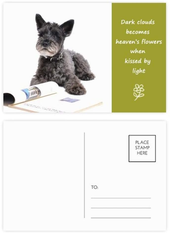 Dog Pet Animal Photography Pictures Poetry Postcard Set Thanks Card Mailing Side 20pcs