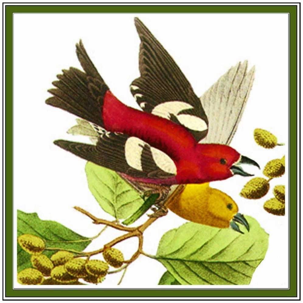 Orenco Originals Crossbill Bird by John James Audubon's Counted Cross Stitch Pattern