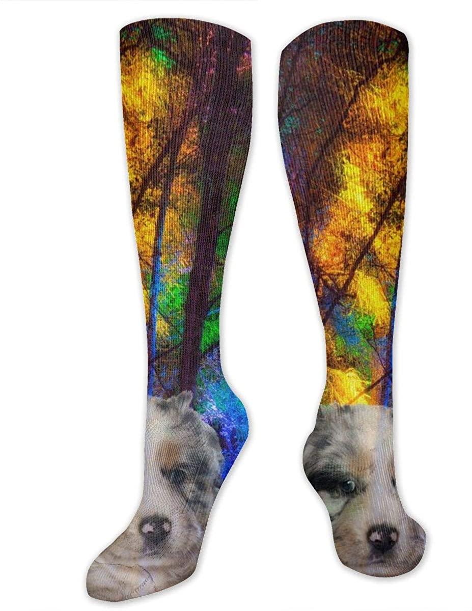 Men Women Knee High Socks Art Australian Shepherd Dogs Tube Long Hose Stockings
