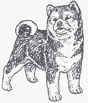 Dog Rubber Stamp - Shiba Inu-2E (Size: 1-3/4 Wide X 2 Tall)