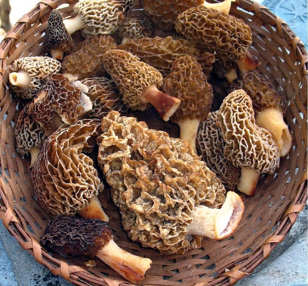 Morchella Morel Mushrooms (Dried) Supplement Organic,Free Range, Naturally Packed w Vitamins Anti-oxidants Trace Elements 260g