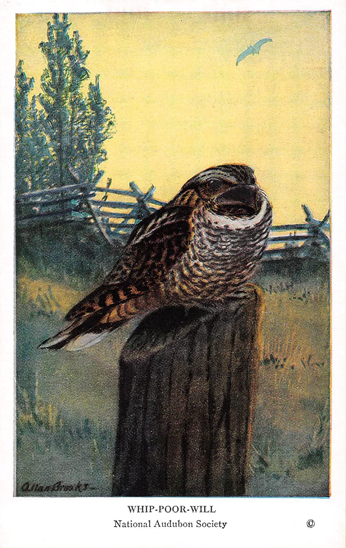 Whip-poor-will 1939 Audubon Summer Birds of Eastern North America #12 (VG+)