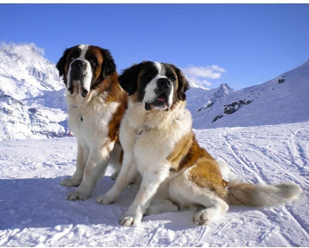 DCPPCPD 5D DIY Diamond Painting, Snow Mountain Animals Two Dogs Kits for Adults Full Drill Crystal Rhinestone Embroidery Cross Stitch Arts Craft Canvas