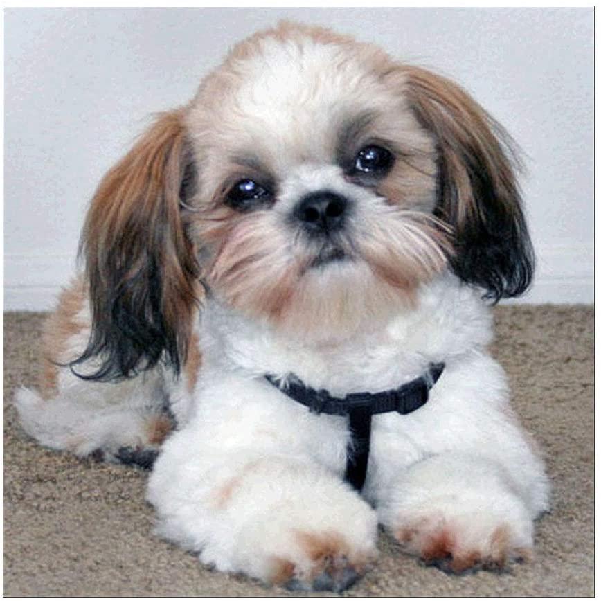 XANGLO Cute Dog 5D DIY Diamond Painting Embroidery Rhinestones Cross Stitch Kit Home Decor Handcrafts