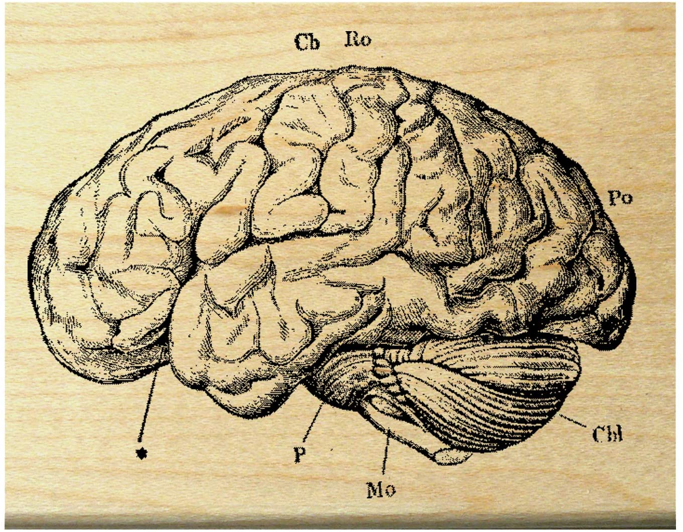 P27 Human Vintage Anatomy Brain Rubber Stamp
