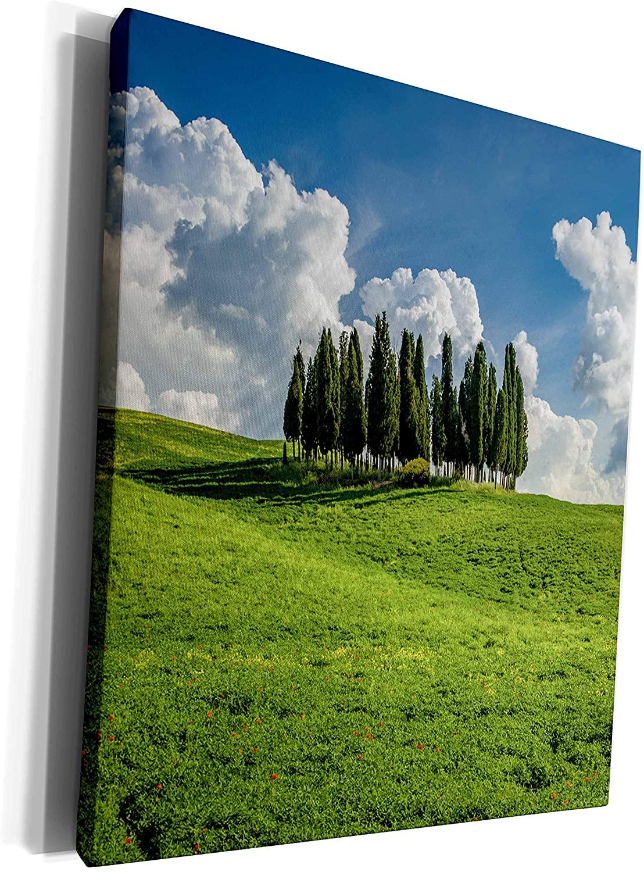 3dRose Danita Delimont - Italy - Italy, Tuscany, Pines hillside - Museum Grade Canvas Wrap (cw_277585_1)