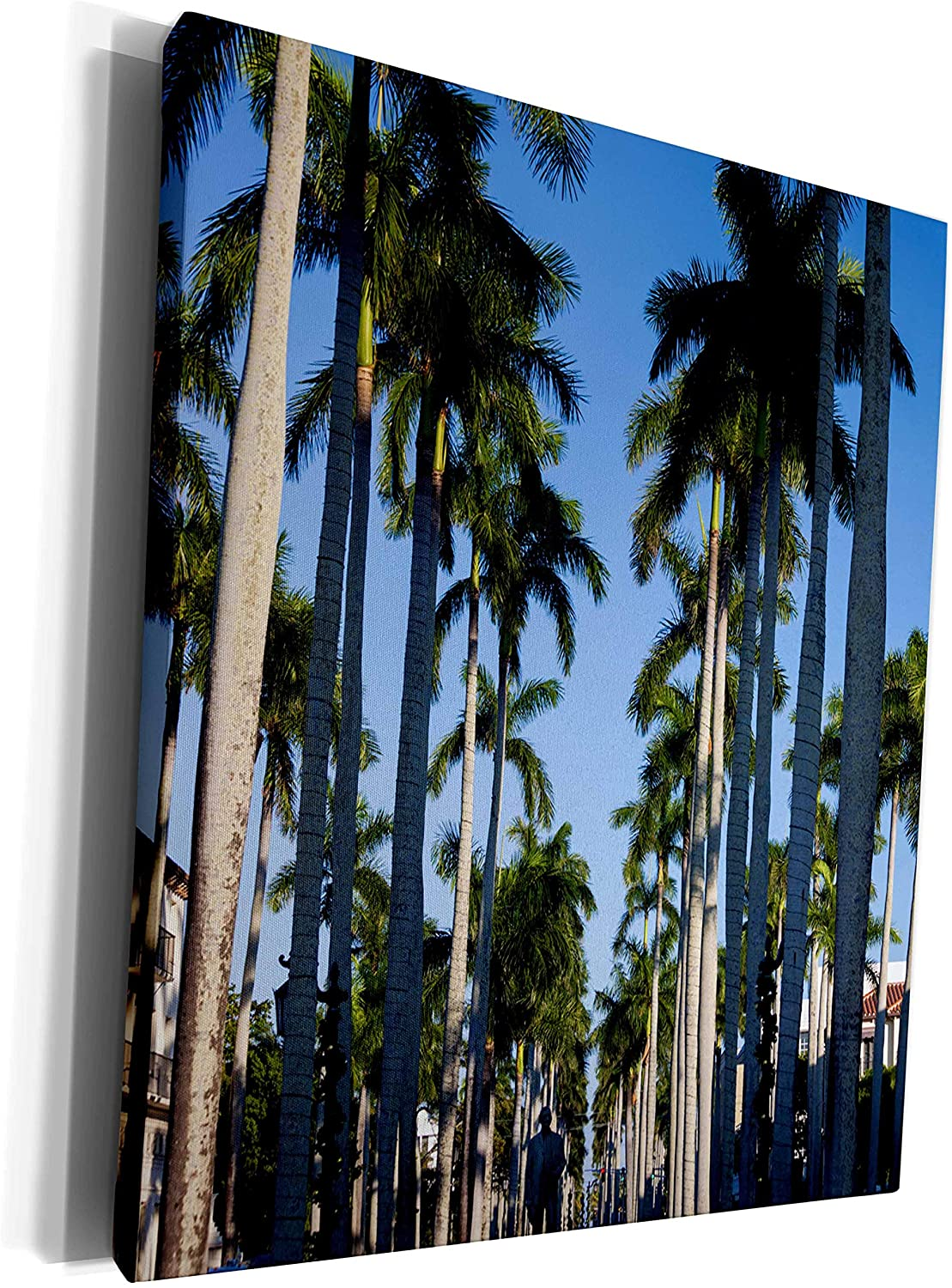 3dRose Danita Delimont - Trees - USA, Florida, Palm Beach, palms on Royal Palm Way. - Museum Grade Canvas Wrap (cw_205503_1)