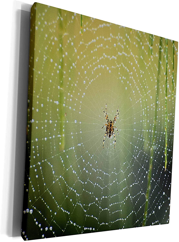 3dRose Danita Delimont - Spiders - Spider on wet web - Museum Grade Canvas Wrap (cw_226234_1)