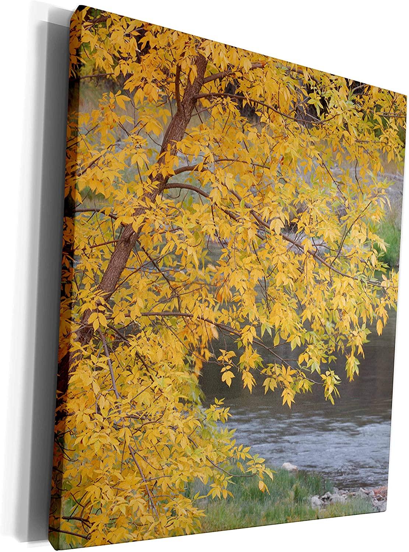 3dRose Danita Delimont - Autumn - USA, Idaho, Salmon River, Autumn color - US13 GRE0069 - Gerry Reynolds - Museum Grade Canvas Wrap (cw_144307_1)
