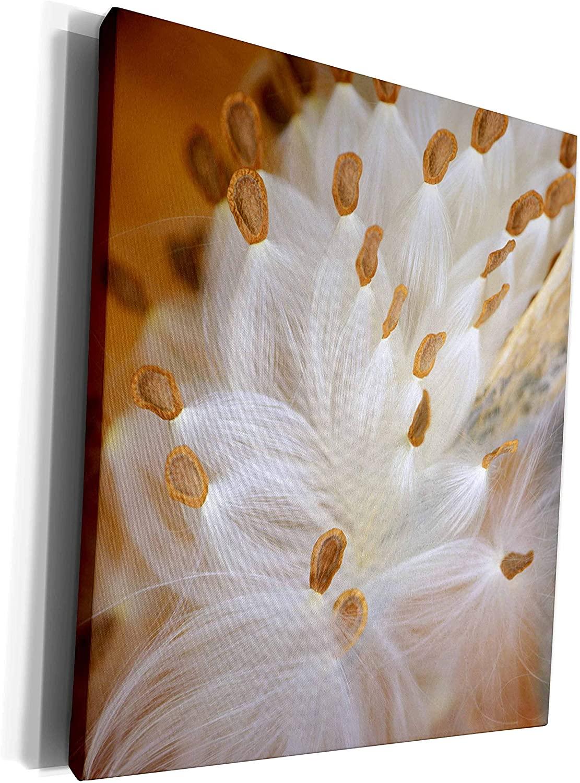 3dRose Danita Delimont - Flora - USA, Pennsylvania, Milkweed flora in fall - US39 BJA0001 - Jaynes Gallery - Museum Grade Canvas Wrap (cw_94154_1)
