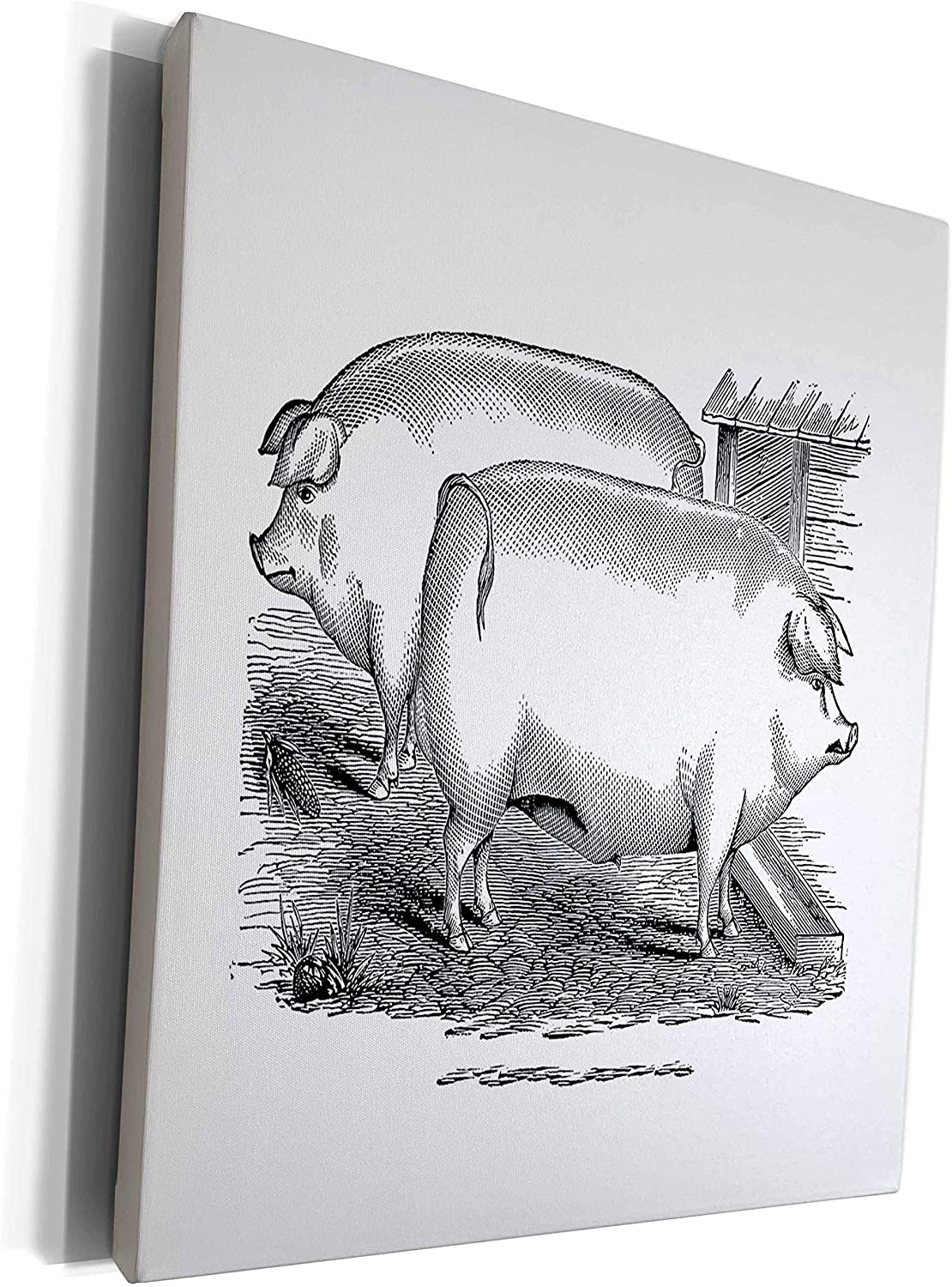 3dRose lens Art by Florene - Black And White - Image of Vintage Drawing Of Chester White Hogs - Museum Grade Canvas Wrap (cw_317073_1)