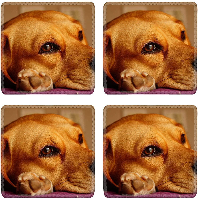 MSD Natural Rubber Square Coasters Set of 4 Design for Dog Cute Animal Puppy Friend Canine Portrait Pet Domestic Purebred Small Ad