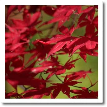 3dRose TDSwhite – Fall Seasonal Nature Photos - Red Japanese Maple Leaves Autumn Day Fall Sunlight Shadows - 6x6 Iron on Heat Transfer for White Material (ht_321850_2)
