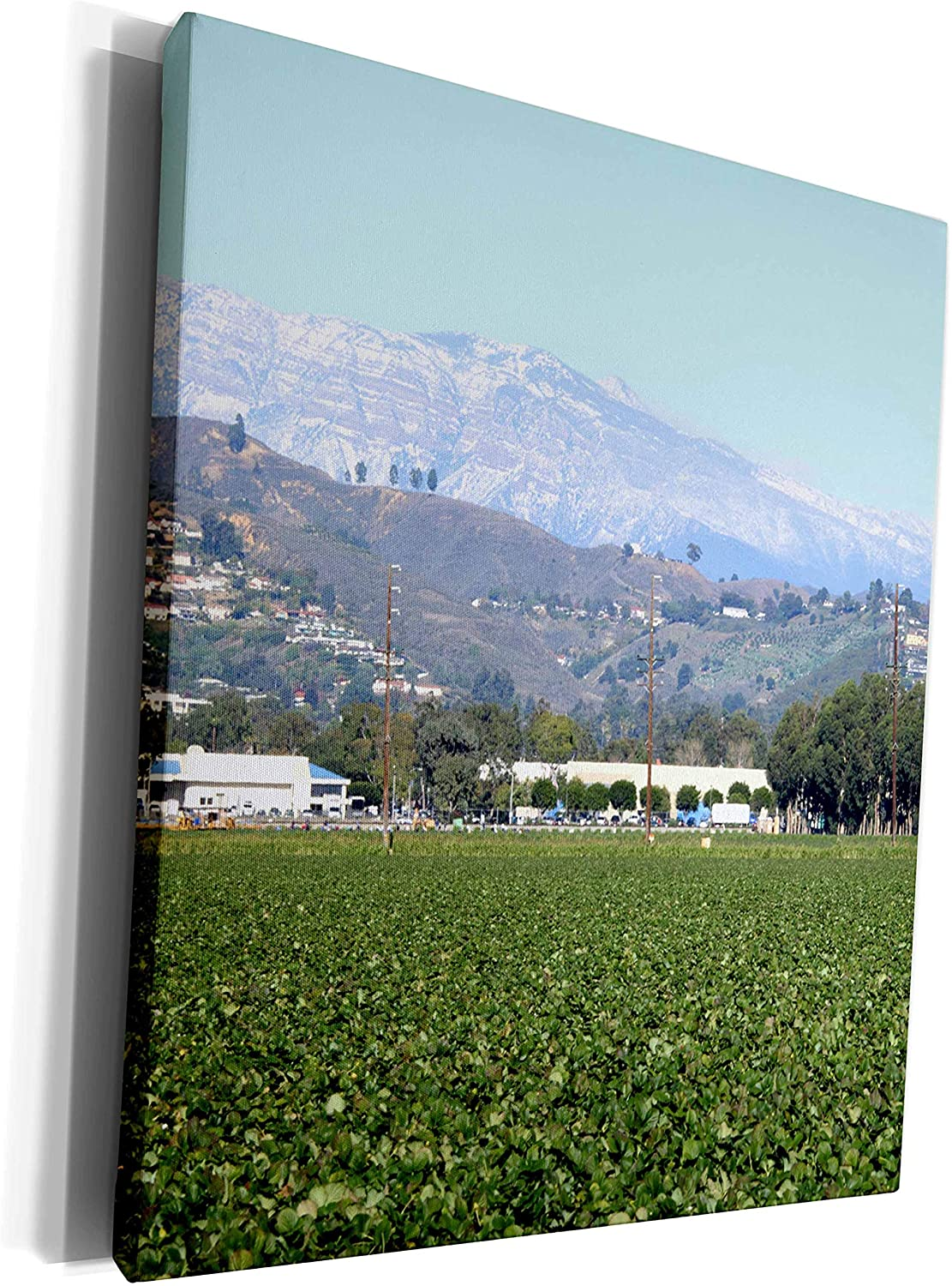 3dRose Henrik Lehnerer Designs - Nature - View of a strawberry field with snow mountains in the background. - Museum Grade Canvas Wrap (cw_211976_1)