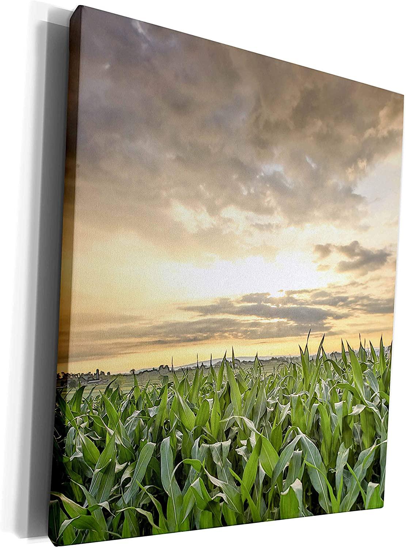 3dRose Danita Delimont - Agriculture - Sunset over silver clouds and cornfield, Lancaster Co, Pennsylvania - Museum Grade Canvas Wrap (cw_259956_1)