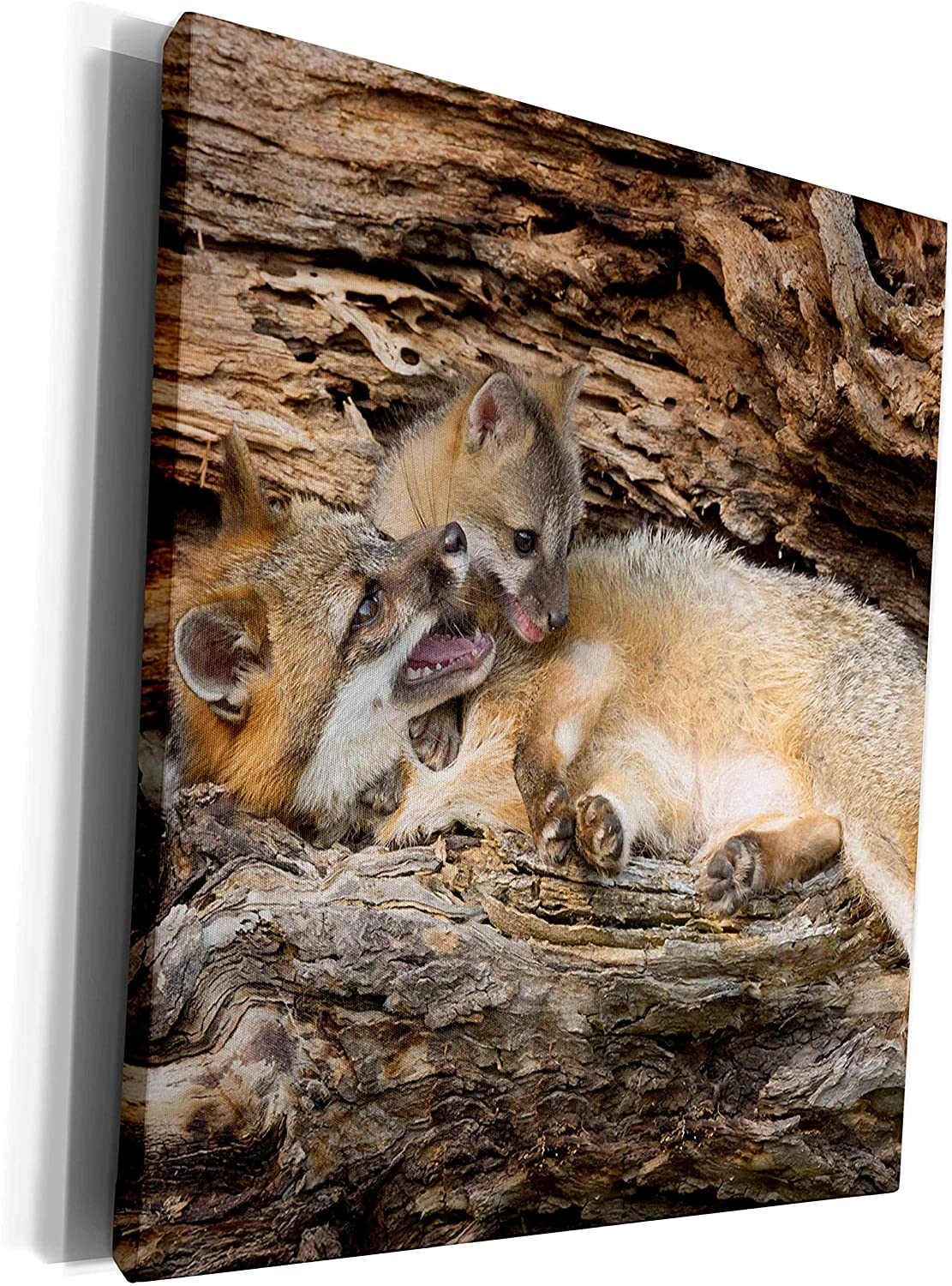 3dRose Danita Delimont - Jaynes Gallery - Foxes - USA, Minnesota, Sandstone. Grey fox mother and pup in a hollow log. - Museum Grade Canvas Wrap (cw_190757_1)